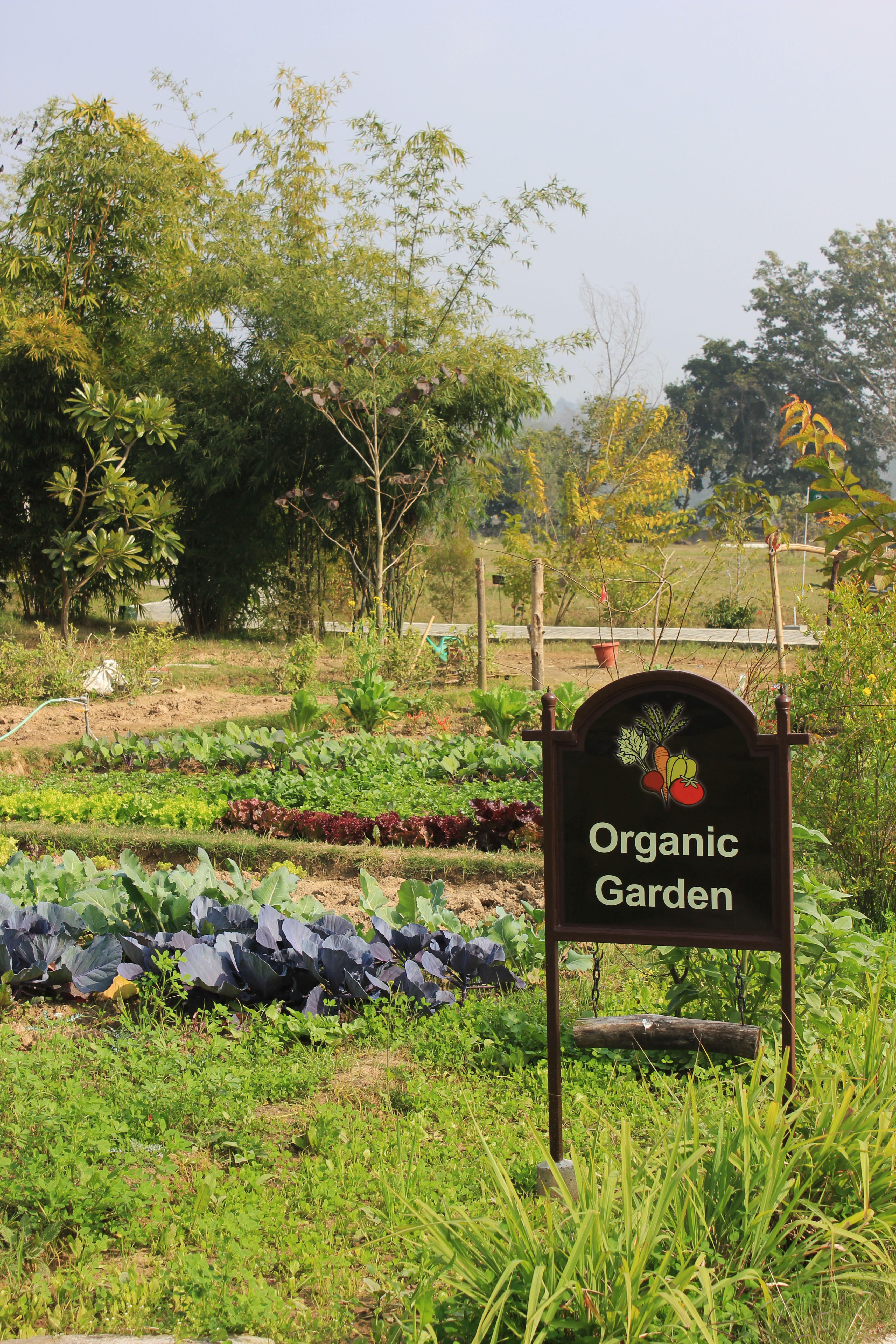 You can pick your own vegetables from the Organic Garden at Aahana