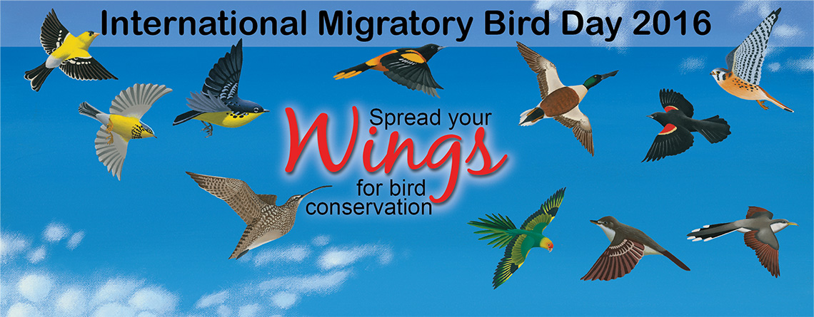 May 10 - International Migratory Birds Day