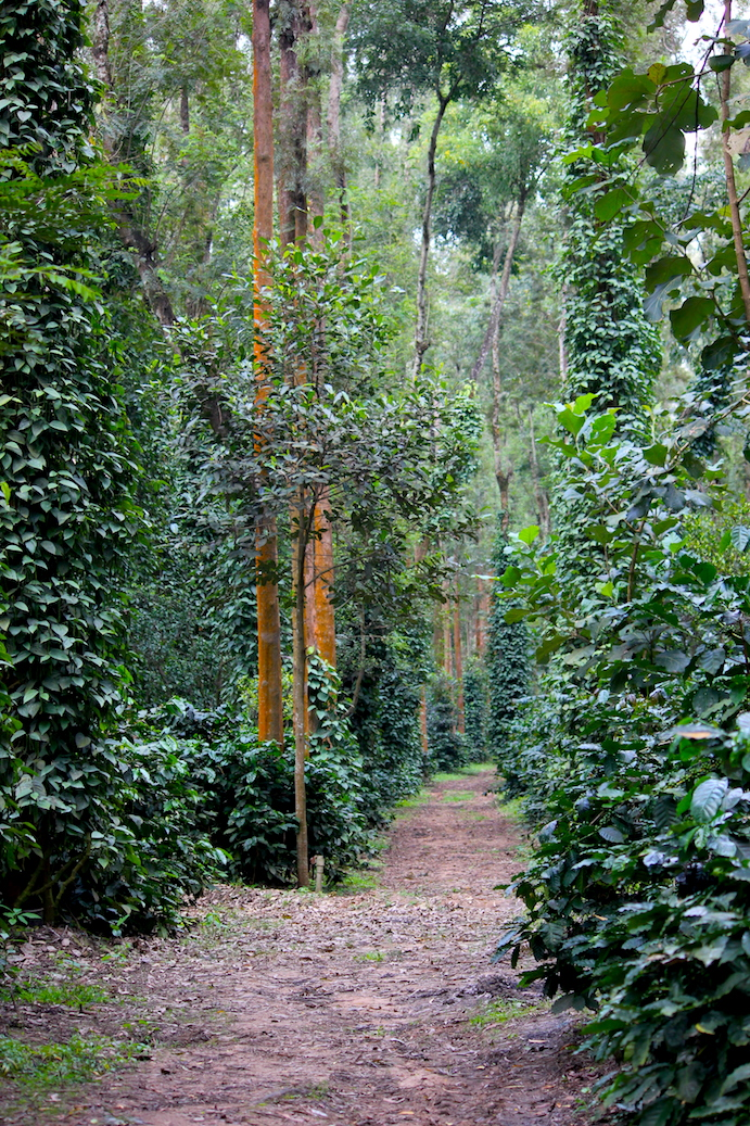estate trail at The Serai Chikmagalur